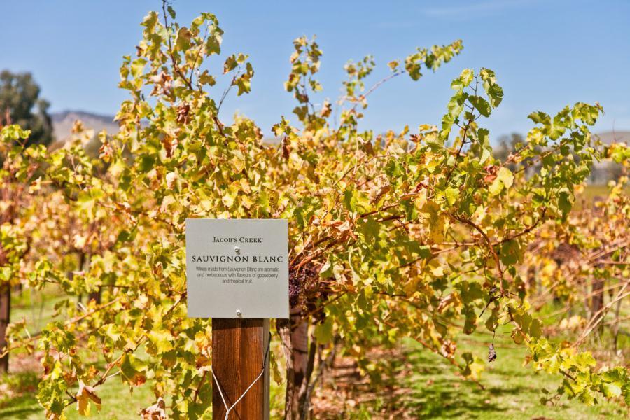 Le sauvignon blanc du vignoble Jacob's Creek, un must !