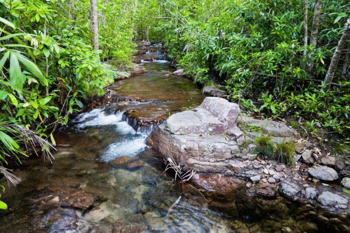 Ruisseau Litchfield National Park