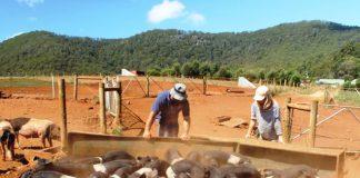 La ferme est entourée des montagnes du Dial range, super vue pour nous et les cochons!