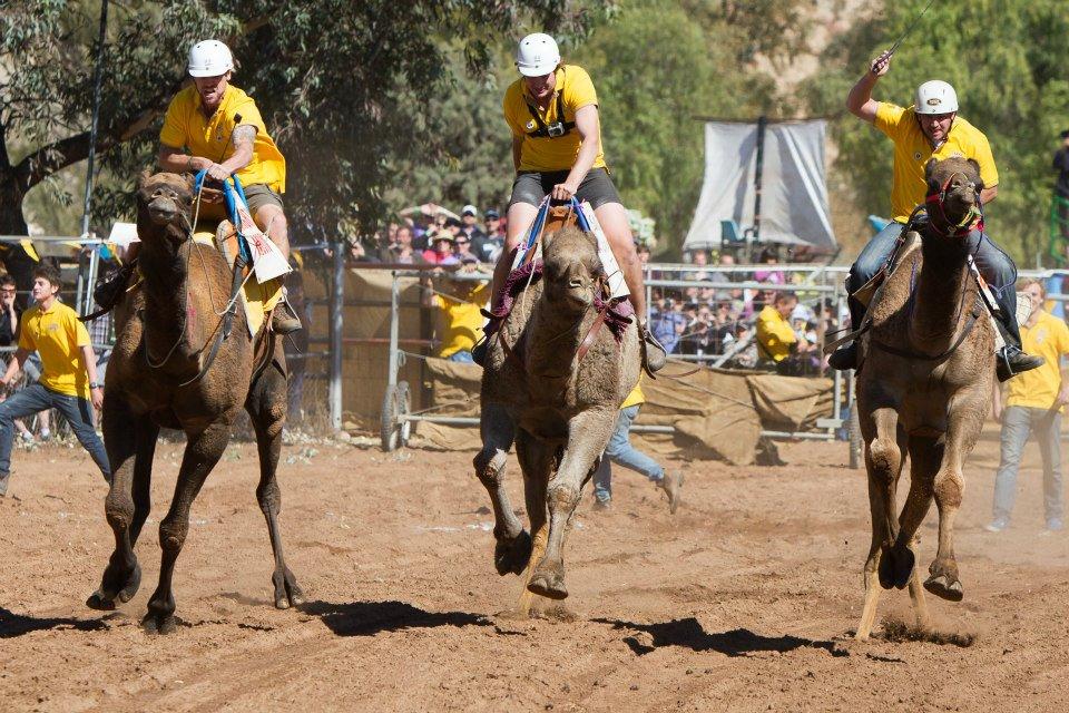 La célèbre course de chameau Camel cup