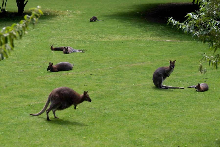 le Jardin des kangourous a coté d'Angers