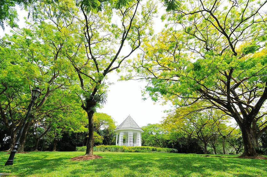 Jardin Botanique - Singapore