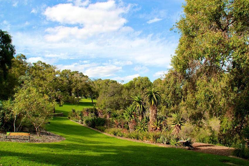King's park Perth