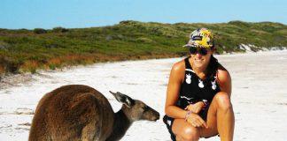 Les kangourous sont fréquents à Lucky Bay