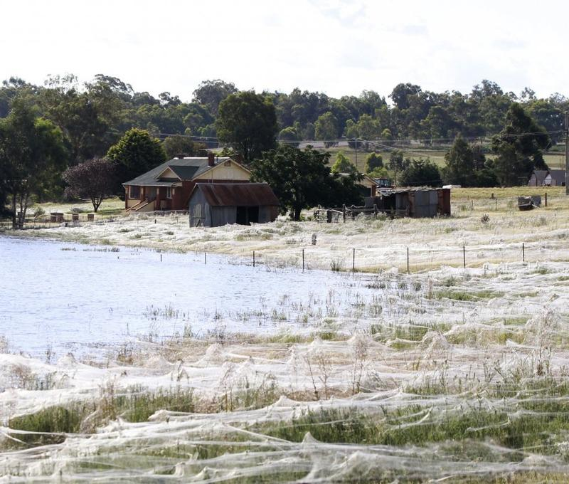 Invasion d'araignées