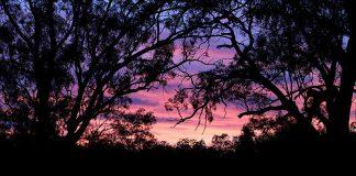 Mallee Country - Victoria - Australie