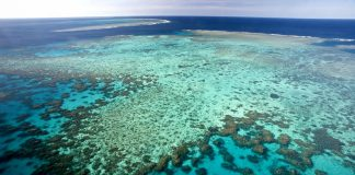 Sauvetage Grande Barrière de Corail