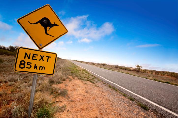 panneau kangourou australie
