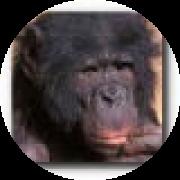 Photo du profil de bonob