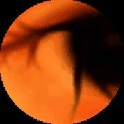 Illustration du profil de bohwaz