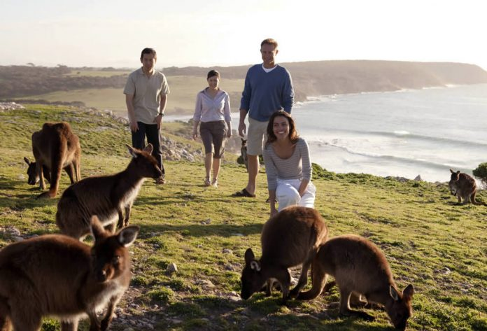 Facile de rencontrer des kangourous sur Kangaroo Island