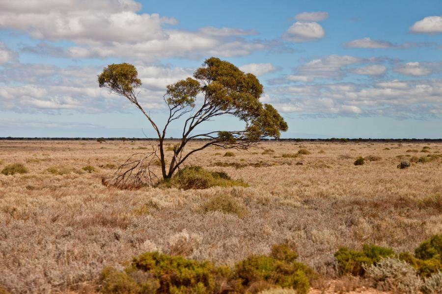 Nullarbor plain