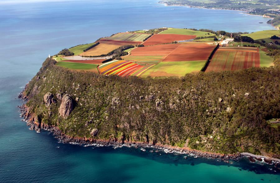 Le sud-ouest de la Tasmanie _Table Cape