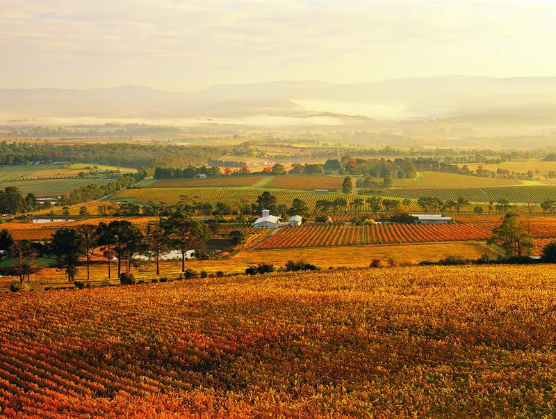 Le coeur des vignobles australien, la Yarra Valley