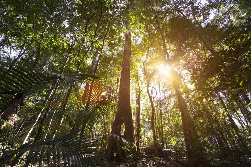 Rainforest - Cairns