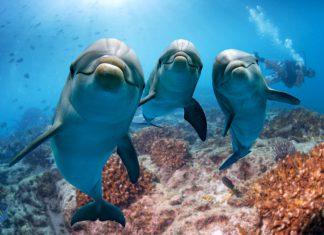 Facile d'observer des dauphins sur les côtes australiennes