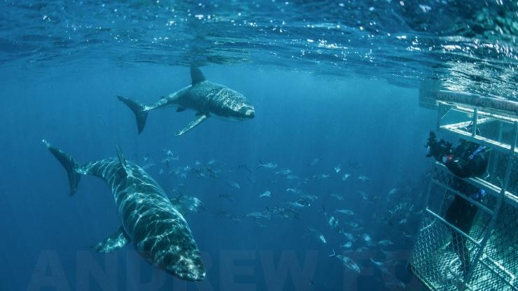 Site de rencontre poisson Australie