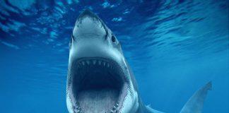 Requins Australie