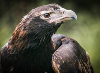Healesville Sanctuary - Victoria - Australie