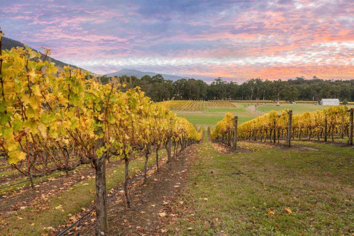 Yarra Valley - Victoria - Australie