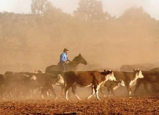 Plus grand terrain à vendre d 'Australie