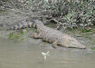 Selfies avec les crocodiles