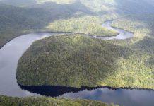 Forêts Tasmanie
