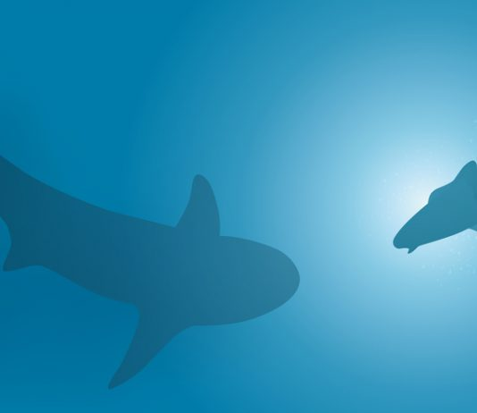 requin sydney