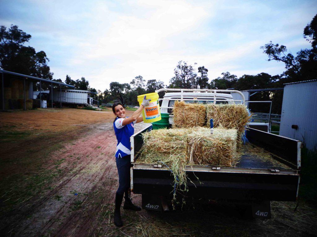 travail à la ferme, nourrir les chevaux
