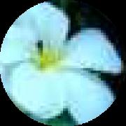 Illustration du profil de axl
