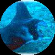 Illustration du profil de jpto