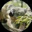 Illustration du profil de korneux