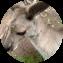 Illustration du profil de coco73