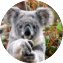 Illustration du profil de JoZ_10