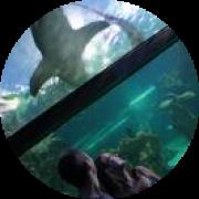 Illustration du profil de kalalie