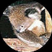 Illustration du profil de Marie-A-Brisbane