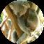 Illustration du profil de aurelie31