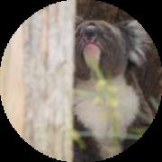 Illustration du profil de NaNoOuU