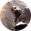 Illustration du profil de felix 73320