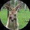 Illustration du profil de Fidou