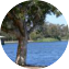 Illustration du profil de Lyha
