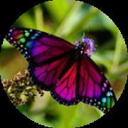 Illustration du profil de Audrey Sydney