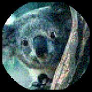 Illustration du profil de NoG