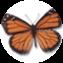 Illustration du profil de Stefanie_flyaway
